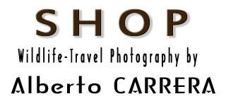 Shop Alberto Carrera